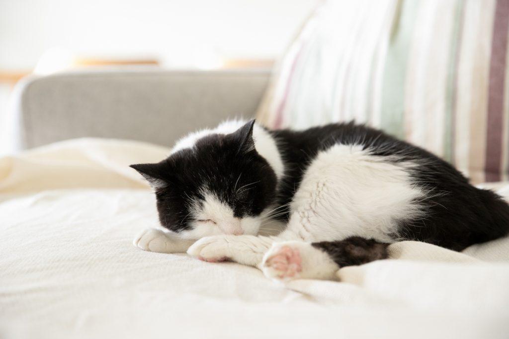 ソファーで昼寝中の猫