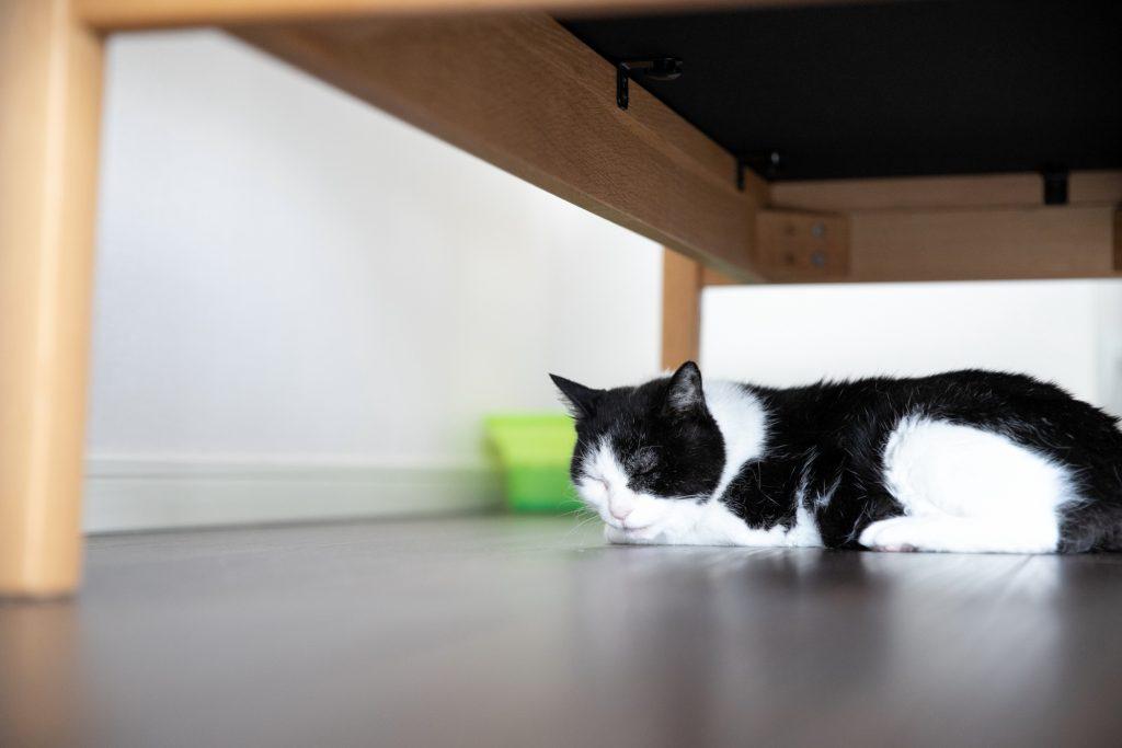 椅子の下が好きな猫ちゃん